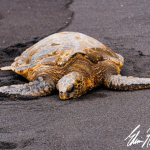 Black Sand Nap by Edwin Rogers